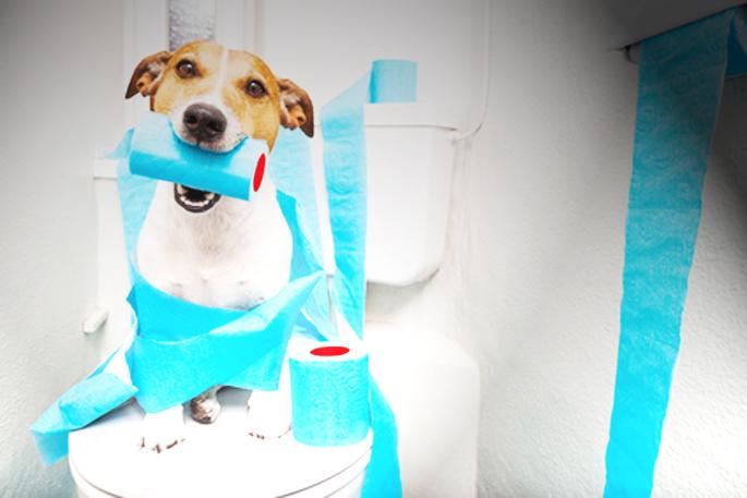 chien aux toilettes
