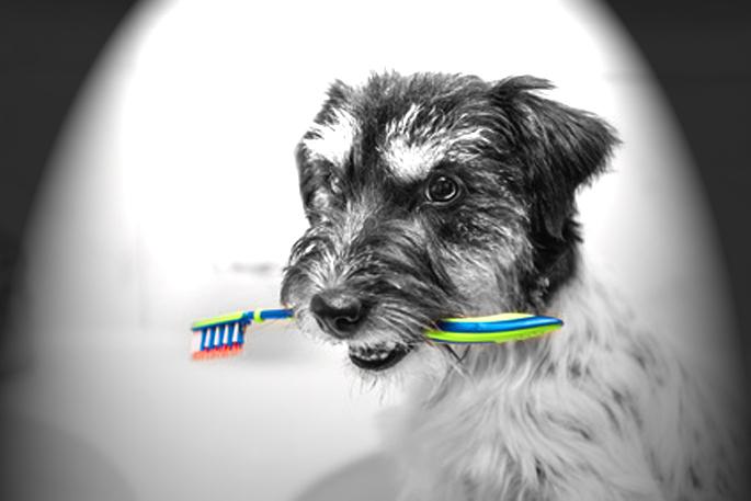 chien et brosse à dents