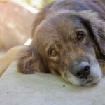 lovely lonely dog waiting for its ower, shallow depth of field, sunshine effect