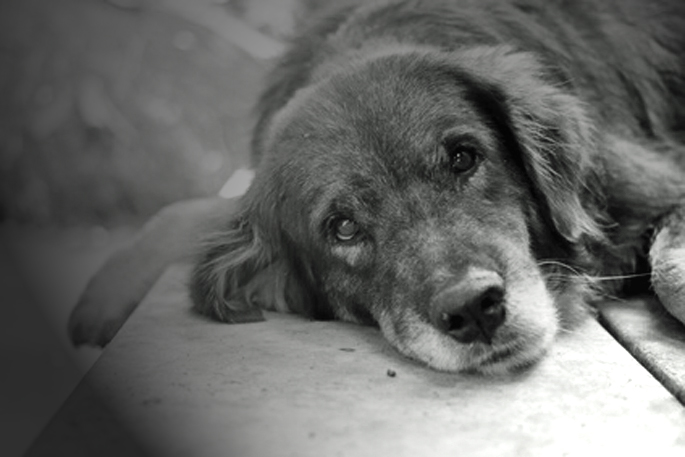 lovely lonely dog waiting for its ower, shallow depth of field,