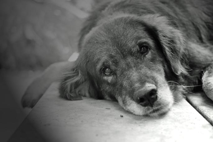 chien décès