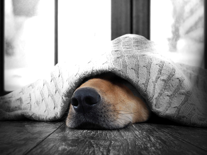 chien qui a froid