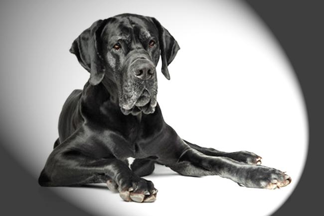 chien problème estomac