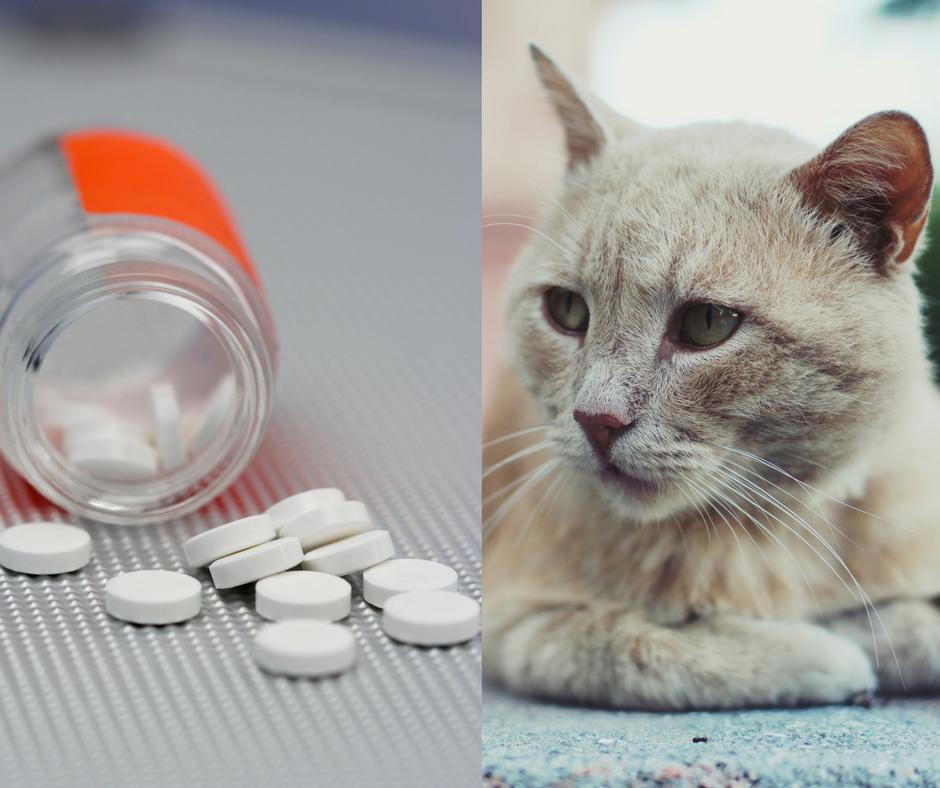 médicaments toxiques pour chat