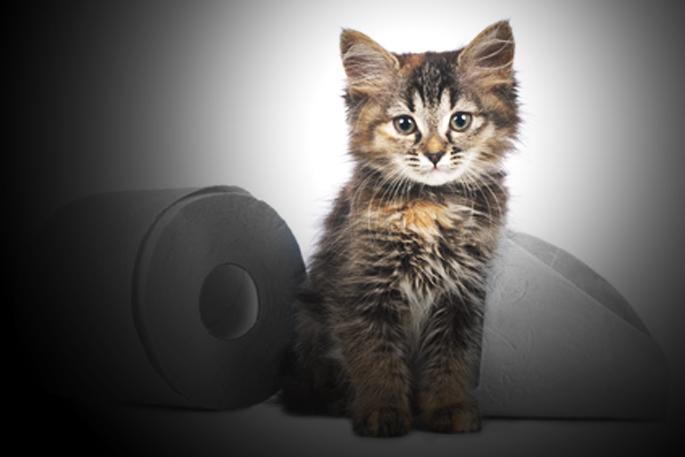 diarrhée de chat