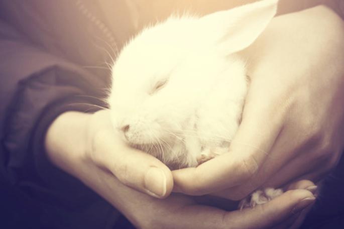 diarrhée de lapin