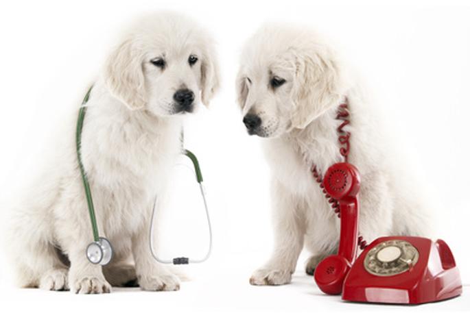 numéro utile urgences vétérinaires