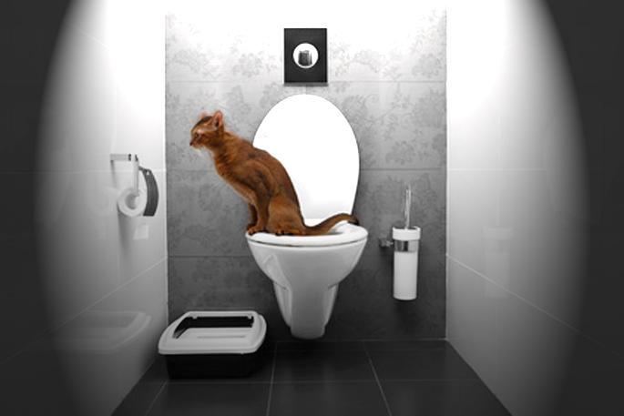 Problème urinaire des chats